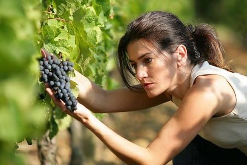 Új lehetőség -  mezőgazdasági termékek értéknövelése a feldolgozásban