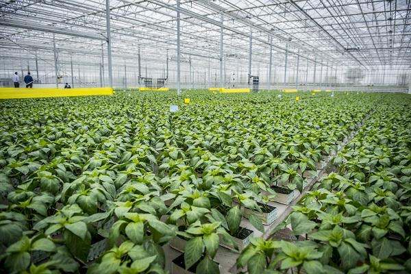VP2-4.1.3-20 Kertészeti üzemek korszerűsítése